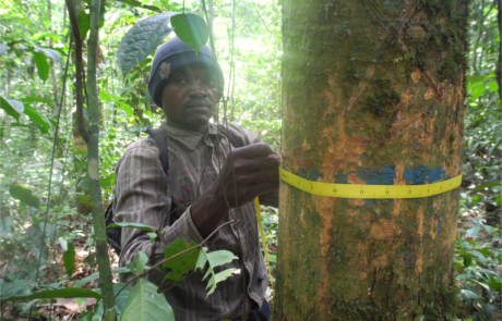 The images shows a technician (Papa Kibinda) from Yangambi, DRC, conducting measurements on a tree from a permanent plot